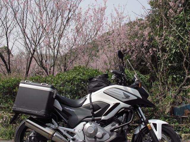6.鳥野神社 桜.jpg