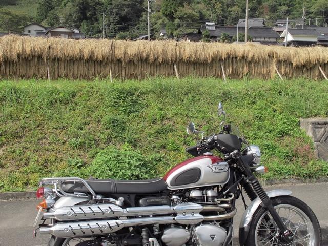 収穫4.jpg